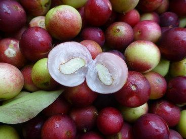 Camu-camu: conheça a poderosa fruta que pode fazer muito pela sua pele
